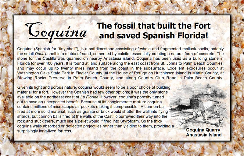 coquina-the-fossil-that-built-the-fort