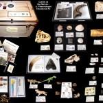 #4 2013 HR Junior Paleonotlogist Educational Kit - Castillo de San Marcos
