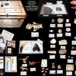 #5 2013 HR Junior Paleonotlogist Educational Kit - Timucuan Kit